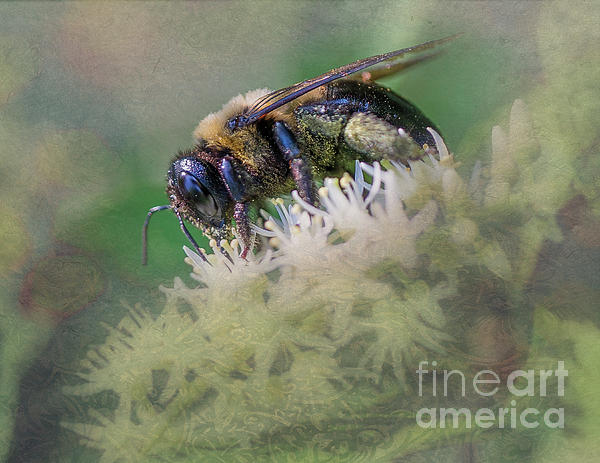 Barbara Molocznik - Beautiful Honey Bee on a flower