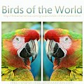 Birds of the World - Art Group